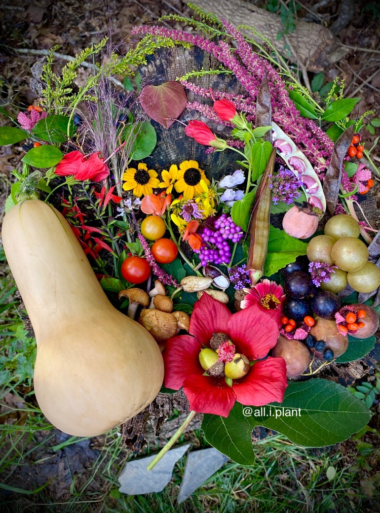 Edible wildlife gardening balance: Native plants, flowers, nuts, and berries with vegetables such as tomatoes and butternut squash.
